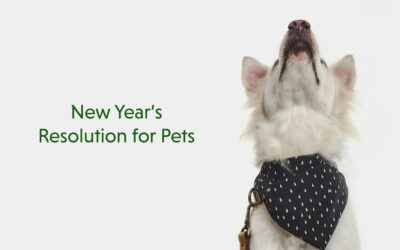 5 New Year's Resolutions You Can Make for your Pets
