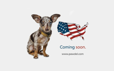 Pet Lifestyle: Philippine made, made for the world.